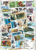 Cuba luksus 1000 forskellige