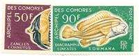 Comorerne - YT PA23-24