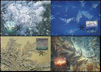 Australian Antarctic - Ice Flowers - Maxi Cards