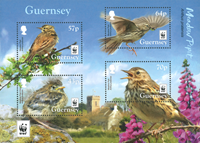 Guernsey - WWF Meadow Pipit - Mint souvenir sheet
