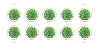 United States - Green Succulent - Mint sheetlet