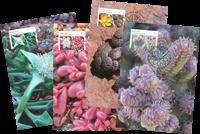 Australia - Succulent plants - Maxi Cards