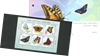 Jersey - Sommerfugle - Souvenirmappe med miniark 6v
