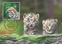 Estonia - Lynx - Maxi Card