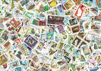1100 dyr