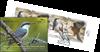 Grèce - EUROPA 2019 Oiseaux nationaux - Carnet obl.
