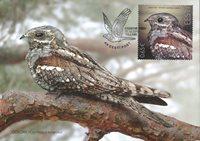 Estonia - Uccello dell'anno / Succiacapre europeo - maximum card