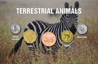 World - Terrestrial animals - 5 coins with animal motifs