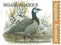België - Brandgans bird - Postfrisse postzegel