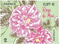 France - Rose de Grasse - Timbre neuf