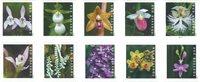 Estados Unidos - Orquídeas silvestres - Sello adh de rello nuevo