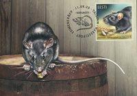 Estonie - Rat noir - Cartes Maximum
