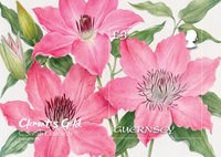 Guernsey - Clematis Sarah Elizabeth - Postfrisk miniark