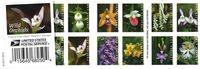 USA - Vilde orkideer - Postfrisk hæfte