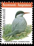 Belgien - Havterne - Postfrisk frimærke
