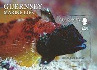 根西岛- 鱼 - 新票,小型张