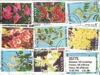 Blomster 100 forskellige