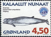 Groenland - 1998. Mammifères marins III - 4,50 kr.  - Multicolore