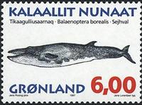 Groenland - 1997. Mammifères marins II - 6,00 kr. - Multicolore