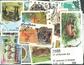 50枚不同非洲动物专题盖销票 - 2002年邮折