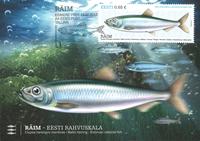 Estland - Østersøsilden - Flot maximumkort