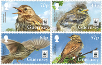 Guernsey - WWF Meadow Pipit - Mint set 4v