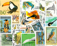 Oiseaux chanteurs - 100 diff.