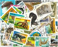 100 forsk. rovdyr