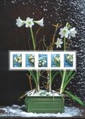 Suède - Fleurs d'hiver - Feuille du collectionneur, neuf
