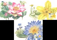 Australia - Water Plants - Maxi Cards