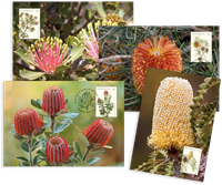 Australie - Banksia - Cartes Maximum
