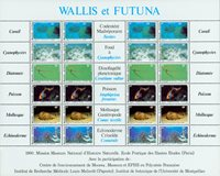 Wallis - Faune et flore pélagiques
