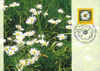 Estland 2007 - Maximum card - LAPE nr. 59 - Daisy