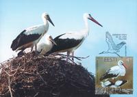 Estland 2004 - Maximum card - LAPE nr. 41 - Stork