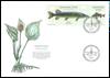 Danmark - Nordiske fisk - Førstedagskuvert med sæt