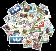 Animaux domestiques - 100 différents