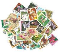 Orchidées - 50 différents