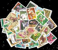 Orkideer - 50 forskellige