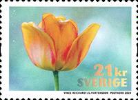 Sverige - Gul tulipan - Postfrisk frimærke fra rulle