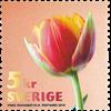 Sverige - Rød tulipan - Postfrisk frimærke fra rulle