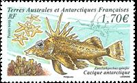 Fransk Antarktis - Cacique fisk - Postfrisk frimærke