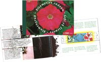 Netherlands - Flowers - Prestige booklet mint with flower seeds