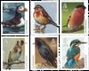 Guernsey - Europa CEPT - Vogels - Postfrisse serie van 6