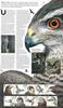 Grande-Bretagne - Oiseaux de proie - Présentation souvenir