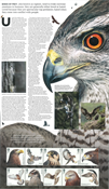 England - Rovfugle - Souvenirmappe