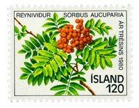 Island - AFA 555 - Postfrisk